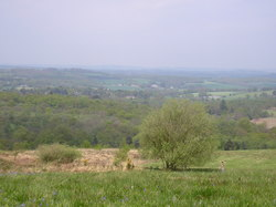 Ashdown_forest_1