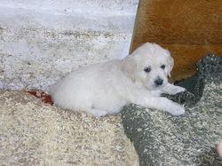 Puppy_1